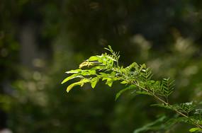 光影绿叶图片