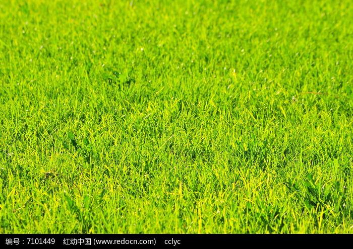原创摄影图 动物植物 花卉花草 绿草地