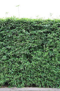 竹子背景墙体