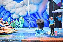 海狮敬礼表演