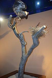 老鹰和蛇标本
