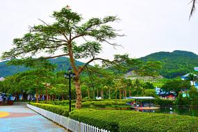 伞形绿色大树