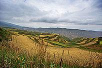 高海拔草原风景