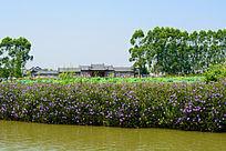 荷花池上的建筑