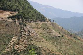 山坡上的地膜风景