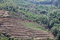 山坡上的农作物