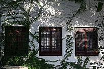 长满植物的窗户
