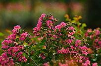 美丽的粉色小花花花世界图片