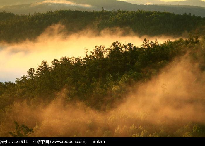 云雾缥缈的大森林高清图片下载 编号7135911 红动网