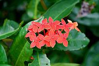红色美丽花朵