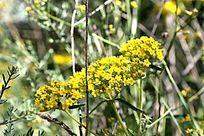 黄色的野花开了