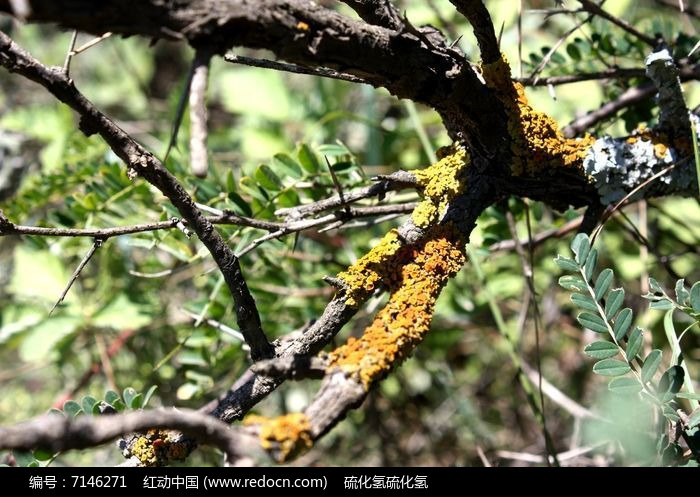 原创摄影图 动物植物 树木枝叶 秋天的树枝