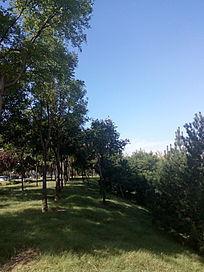碧空下的园林一角