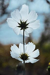 泸沽湖风景摄影-花朵特写