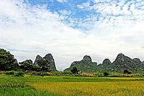 山峰下稻田
