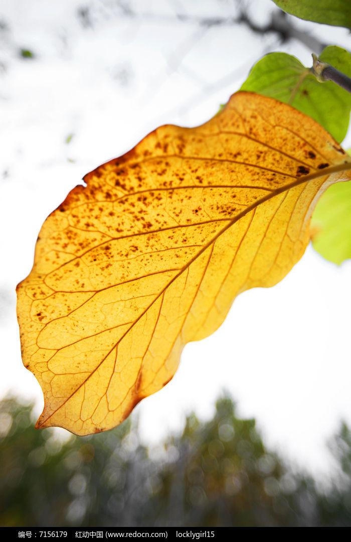 原创摄影图 动物植物 花卉花草 黄色叶子特写  请您分享: 红动网提供