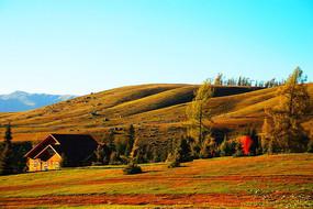 新疆白哈巴高原草甸秋色