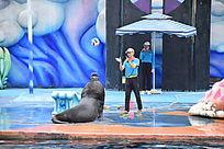 黑色海狮抛球瞬间