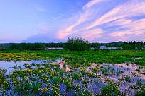 美丽的湿地