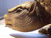 雕齿兽头部模型