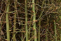 竹子竹林风景图片