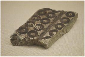 古代钱币模板