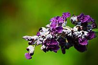 紫色的花梦幻背景
