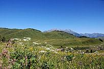 禾木草原群山野花