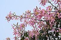 开满花朵的树木风景图片