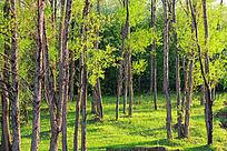 绿树林景观