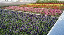 美丽的五色花朵