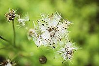 飘散的花种子