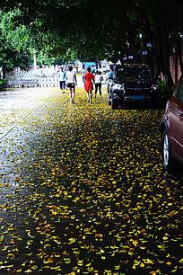 铺满黄叶的道路