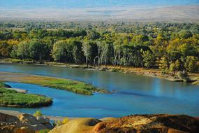 五彩滩额尔齐斯河边的白桦林