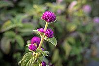 阳光下的紫色小野花高清摄影图片