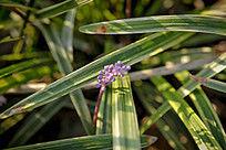 阳光下的紫色小野花高清图片