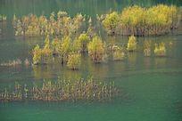 秋天的河水植被