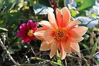 阳光下亮丽的花朵