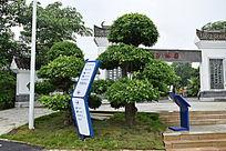 公园树木景观图片