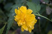 一朵黄色的小花