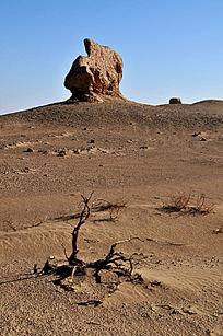 古城墙与枯树