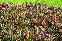 花圃草地风景图片