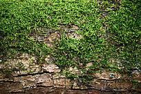 绿色苔藓背景