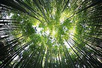 面朝阳光绿色森林的天顶画