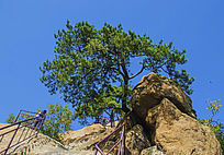 千山无量观老子传道奇石与松树