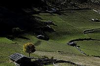 其他-山坡上的农田