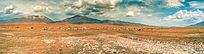 全景草原上的羊群