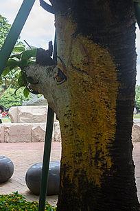 树干卡通长颈鹿绘画