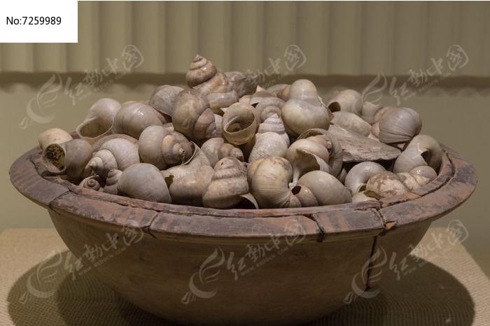 海螺壳图片
