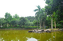 池塘自然风景图片
